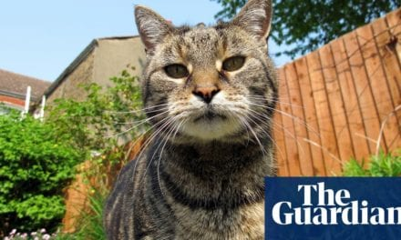 What can I do concerning 3 cat-murdering pets in a neighbourhood backyard?|Life and design|The Guardian