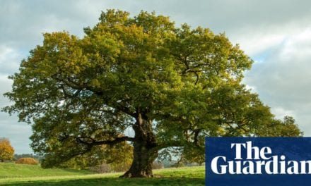 How to grow trees– and also conserve the world|Alys Fowler|Life as well as design|The Guardian