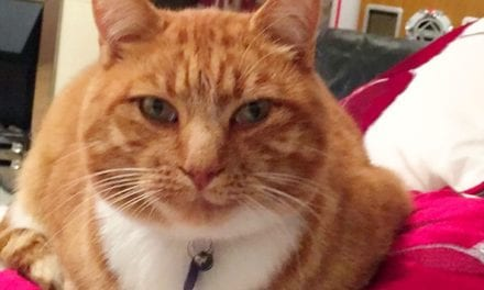 Family sent video of their missing cat with its head cut off