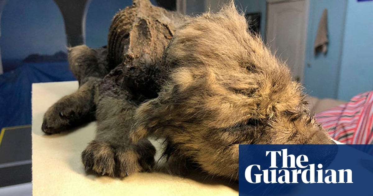 Doggone it! Just how an 18,000-year-old pup can transform whatever we understand about dogs|Life and also design|The Guardian