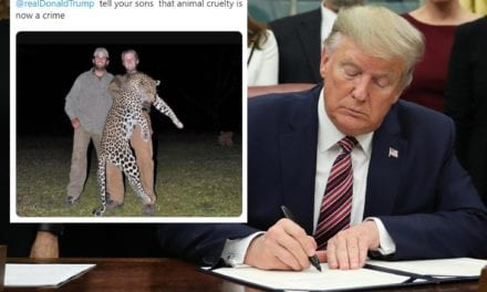 Mia Farrow shares photo of Trump children with dead leopard: 'Tell your sons animal cruelty is now a crime' | The Independent
