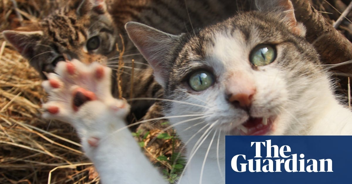 Claws out! Why cats are causing chaos and controversy across Britain | Life and style | The Guardian