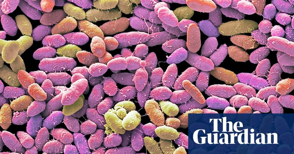 The poo panacea: inside the strange, surprising world of faecal transplants | Life and style | The Guardian