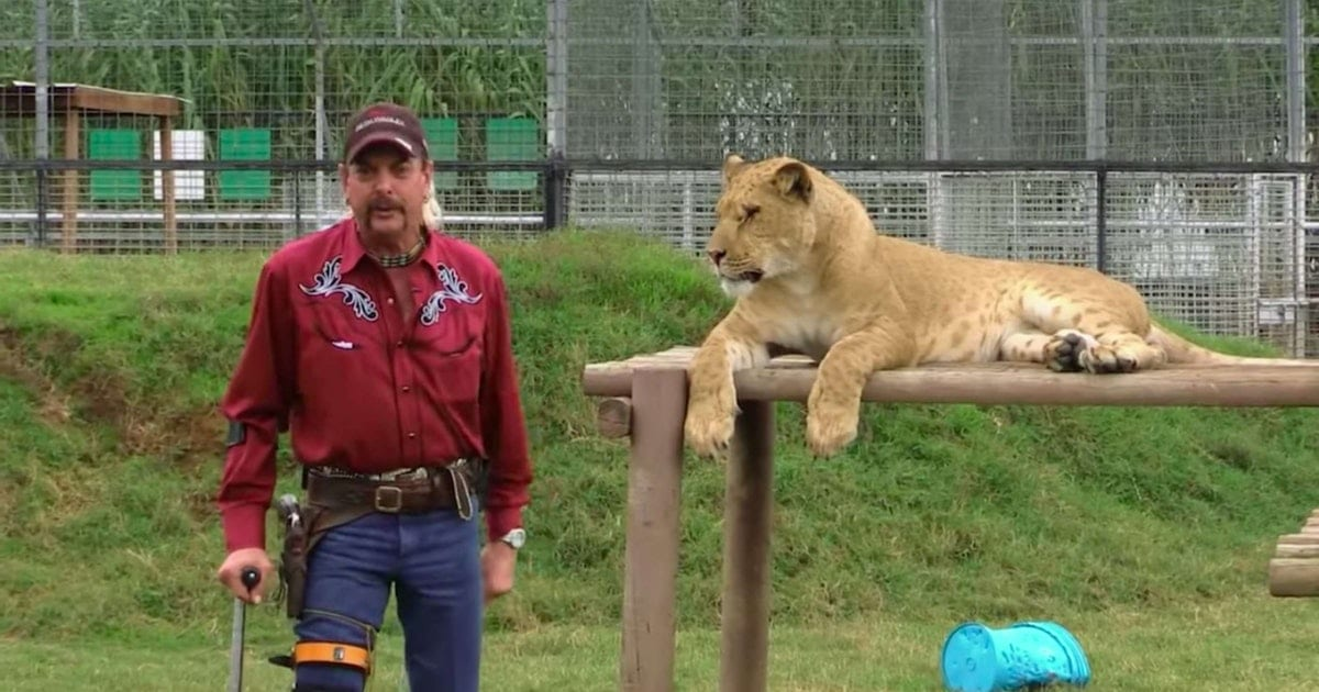 The Best 'Tiger King' Memes, From Joe Exotic's Style To Carole Baskin's Antics