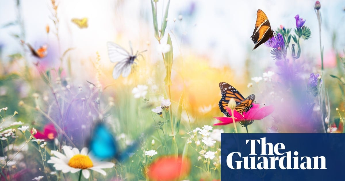 More birds and bees, please! 12 easy, expert ways to rewild your garden | Life and style | The Guardian