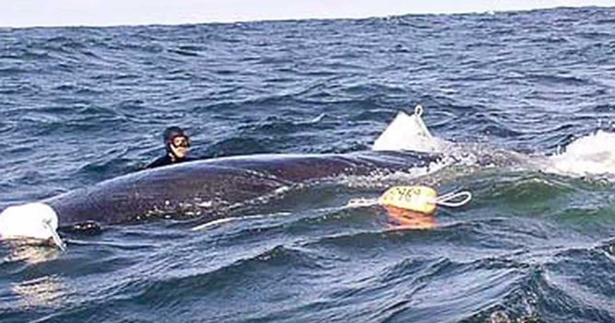Diver Rescues Whale With Anchor Tied To It. Whale Thanks Him In Spectacular Fashion