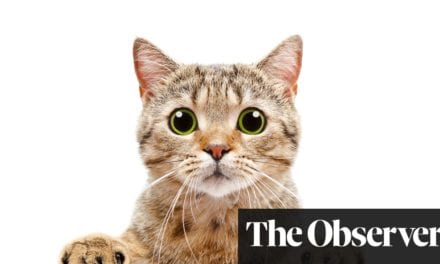 What does your cat mean by 'miaow'? Let Japan's pet guru Yuki Hattori explain | Life and style | The Guardian