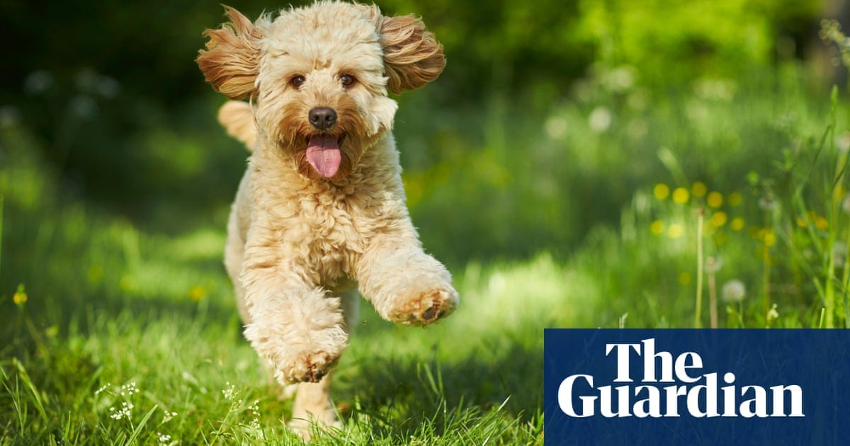 My dog has taught me the best way to get through the pandemic: live in the now | Life and style | The Guardian
