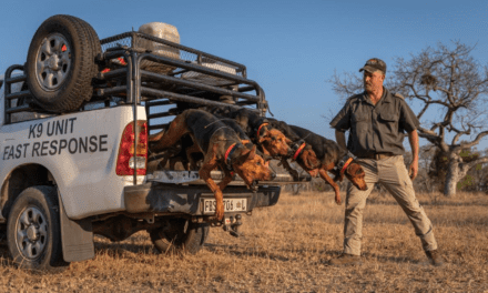 Texas Pack Hounds Charge to the Rescue for Rhinos in South Africa, Nabbing 145 Poachers So Far – EnviroNews | The Environmental News Specialists
