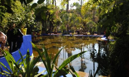 3 Botanical Gardens That Every Plant Lover Should Visit – My Daily Magazine – Art, Design, DIY, Fashion and Beauty !