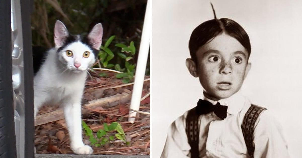 """Stray Kitten With A Unique Hair """"Style"""" Given The Name Alfalfa…And A Forever Home"""
