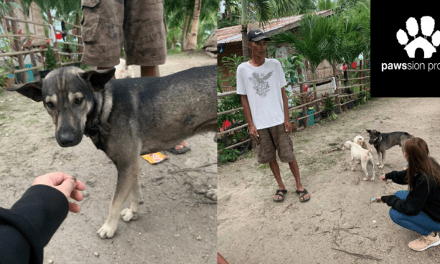 Blacky, the hero dog who saved the life of a newborn, to receive help from an animal rescue group – Kicker Daily News