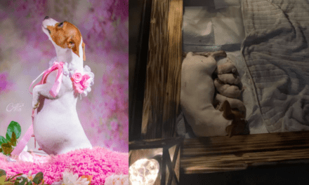 The puppies are out! Dog who became famous for her amazing pawternity shoot is now a mom – Kicker Daily News