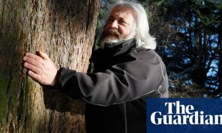 Experience: I'm a tree hugger | Life and style | The Guardian