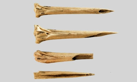 The oldest known tattoo tools were found at an ancient Tennessee site   Science News