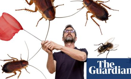 Spare that flea! How to deal humanely with every common household pest   Life and style   The Guardian