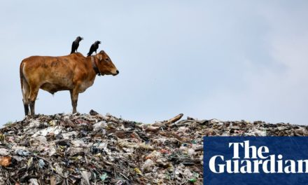 UN sets out Paris-style plan to cut extinction rate by factor of 10 | Biodiversity | The Guardian