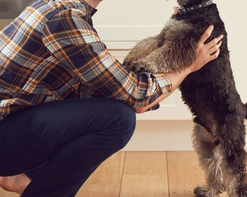 What is your dog's social motivation?